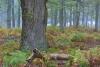 bodensaurer-eichenwald-_o4a7312