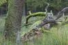 bodensaurer-eichenwald-_o4a7527