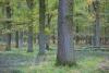 bodensaurer-eichenwald-_o4a7534