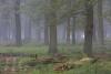bodensaurer-eichenwald-niederrhein-_o4a7334