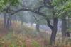 bodensaurer-eichenwald-niederrhein-_o4a7355