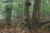 buchenwald-niederrhein-_o4a6295