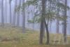 kiefernwald-_o4a7296