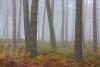 kiefernwald-_o4a7305