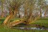niederrhein-_mg_0123-h-glader