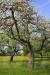 niederrhein-_mg_3135-h-glader