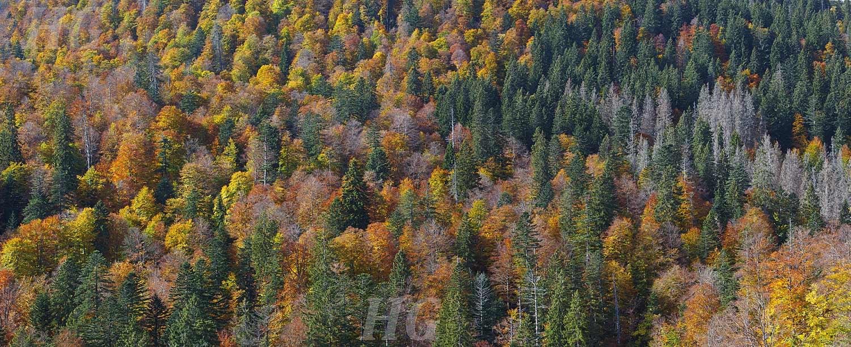 wildnis_panorama5-h-glader