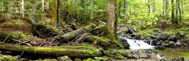 wildnisgebiet-duerrenstein-urwaldpanorama3-h