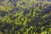 alpiner-bergmischwald-_o4a2464-h-glader