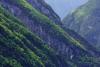 Alpine Laubwälder, Slowenien _o4a2311