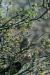 steinkauz-34-h-glader