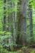 urwald-_mg_9658-h-glader