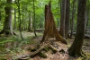 wildnisgebiet-duerrenstein-_mg_0220-h-glader