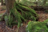 wildnisgebiet-duerrenstein-_mg_9987