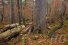 wildnisgebiet-duerrenstein-oesterreich-_mg_9424-h-glader