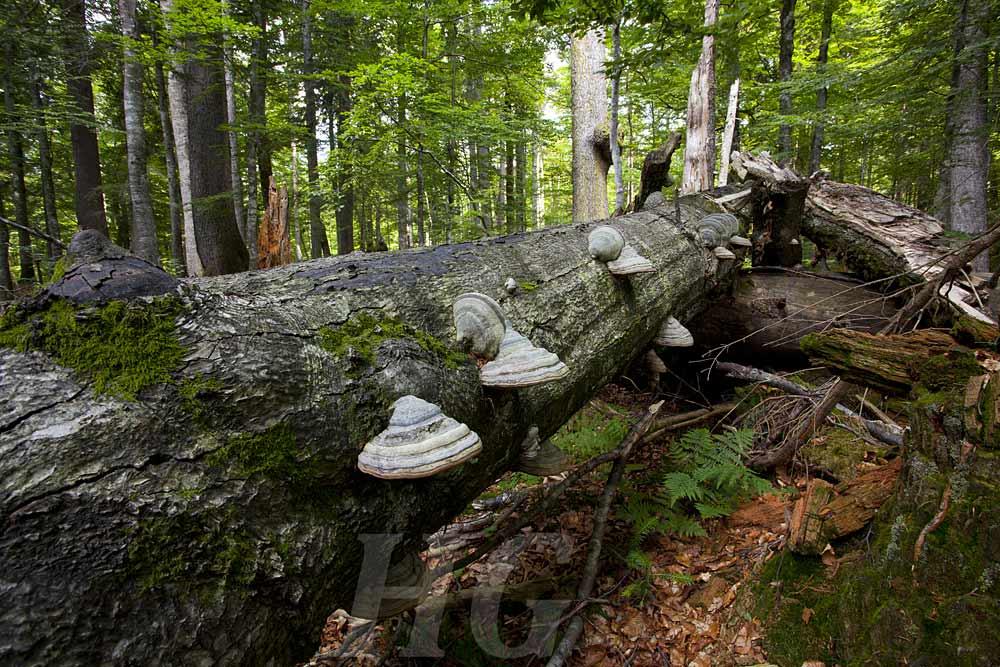 urwald-rothwald-oesterreich-_mg_0202-h-glader