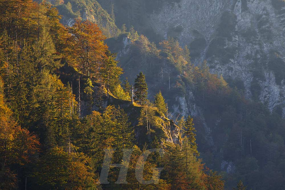 wildnisgebiet-duerrenstein-_mg_2504-h-glader